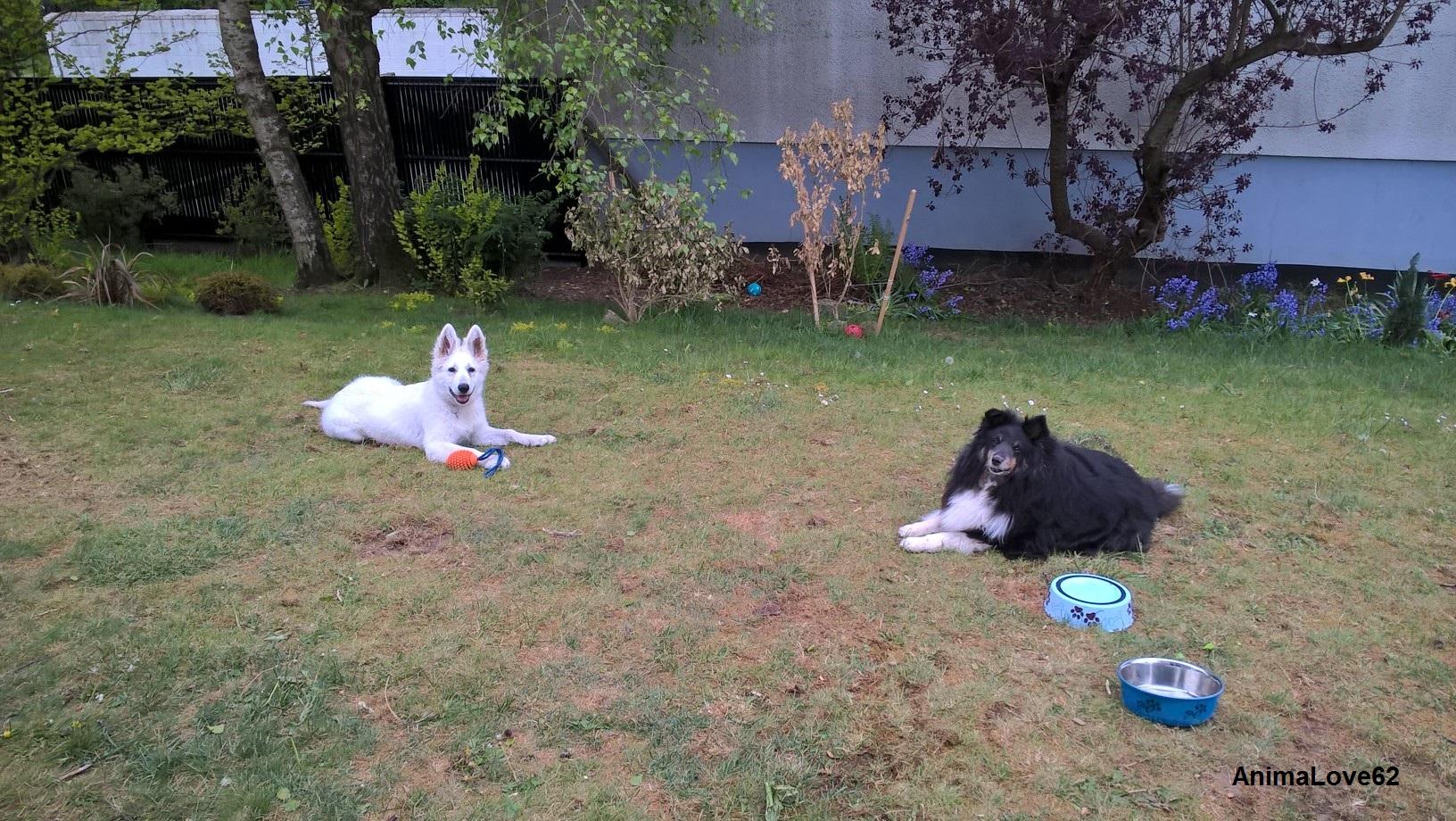 Différences entre moniteur et éducateur canin: